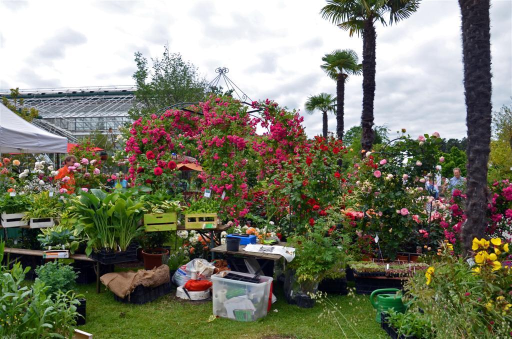 Veranstaltung Rosenschau im Botanischen Garten - München ...