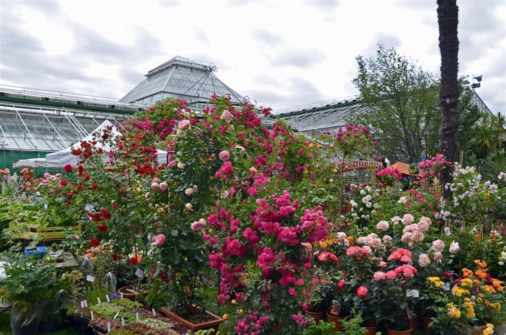 veranstaltung rosenschau im botanischen garten m nchen bis bayernradar. Black Bedroom Furniture Sets. Home Design Ideas